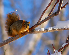 Made it Through (Fort Photo) Tags: house snow home nature squirrel bravo colorado fort wildlife snowstorm fortcollins 2006 urbanwildlife co blizzard collins yardanimals 50faves outstandingshots specnature shieldofexcellence isawyoufirst