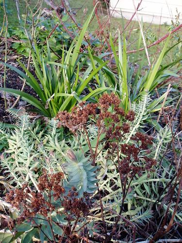 Winter Plant Combo