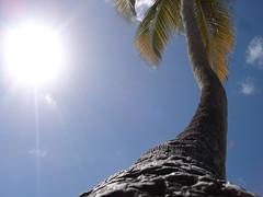 Low angle (Abillman) Tags: palmtree dazzler0 piratetreasure2 piratetreasure3