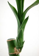 my bamboo from Ikea - by TroyMason