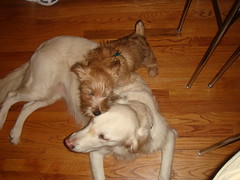 Varla and Frisket