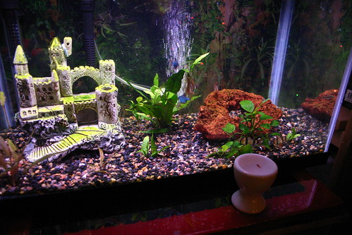 decorations fish aquarium barbs