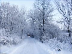 Winter path (♥ B i b b i ♥) Tags: winter white snow tree vinter sweden stockholm sverige snö träd 2007 hässelby vit