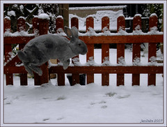 SNOW JOY (Jan2eke) Tags: pet snow rabbit bunny fun happy jump jumping nikon joy d70s specanimal abigfave anawesomeshot impressedbeauty