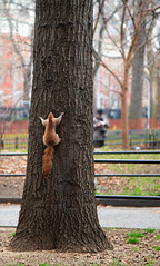 When Squirrels have Anxiety Attacks! - by ehpien