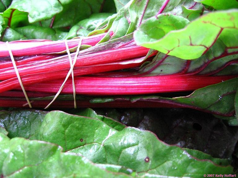 Rhubarb and Rubber Band