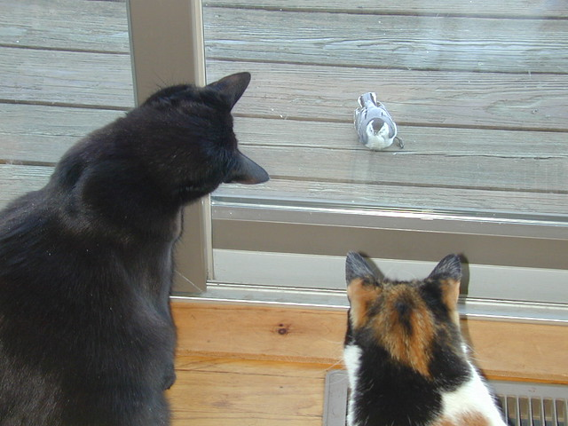Cats n Nuthatch
