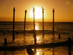Birds at Sunset (Musical Mint) Tags: ocean travel sunset summer sky sun beach pelicans water beautiful birds island paradise horizon carribean aruba stunning posts settingsun helluva favouritespot musicalmint wowiekawozie