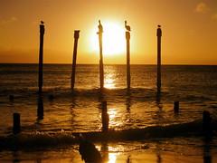 Birds at Sunset (Musical Mint) Tags: ocean travel sunset summer sky sun beach pelicans water beautiful birds island paradise horizon carribean aruba stunning posts settingsun helluva favouritespot musicalmint wowiekawozie