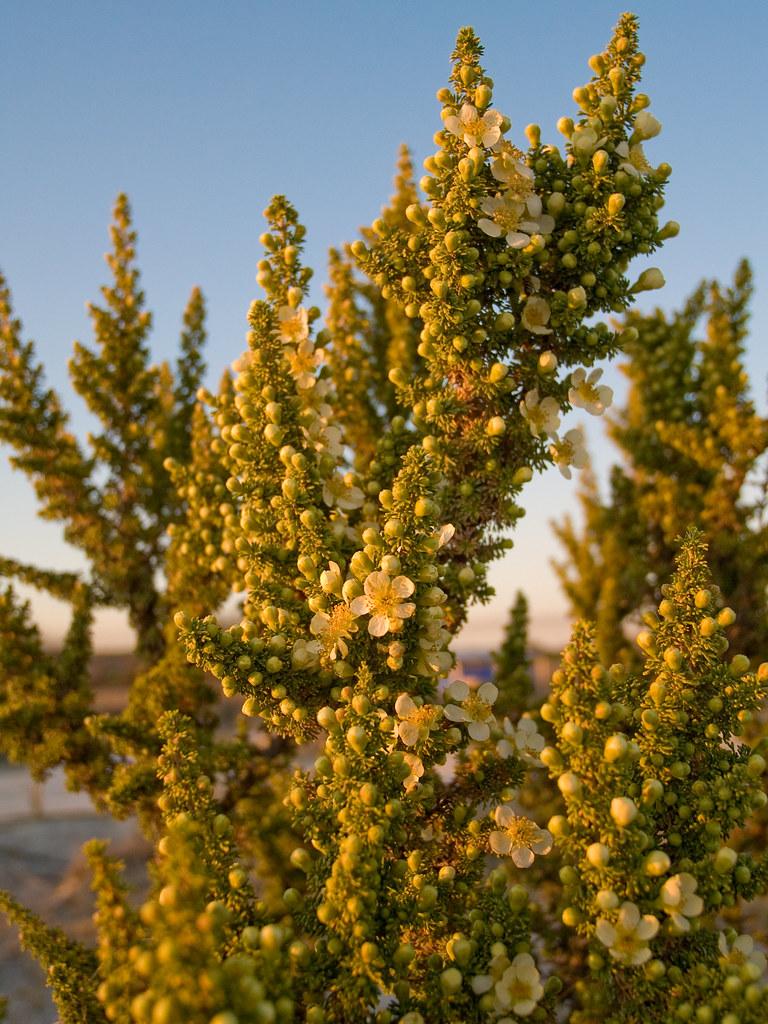 Springtime in the Desert 2
