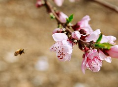Almond tower this is bee 7829er...