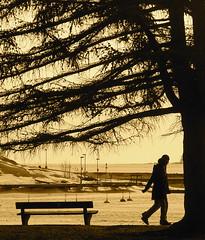 Timing (Lalallallala) Tags: winter sea snow tree ice sepia bench helsinki couple walk balticsea together larch stroll kaivopuistonranta