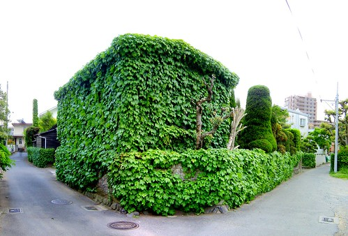 Ivy covered house 1