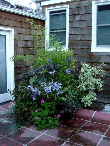 Container Gardening by edgeplot