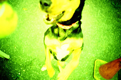 LomoCamille (-Antoine-) Tags: dog chien green yellow jaune stand lomo lca vert camille debout antoinerouleau