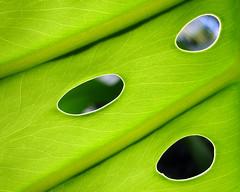 Leaf - by elston