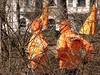 track-club (Rochelle Ratner) Tags: gatesmemory gates centralpark orange newyork