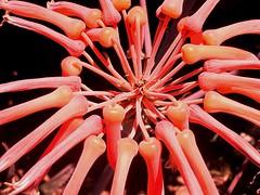 Flora auf Mallorca 06 (Best Diver) Tags: plants makro pflanzen closeup jensbest mallorca deleteme deleteme2 deleteme3 deleteme4 delteme5 deleteme6 deleteme7