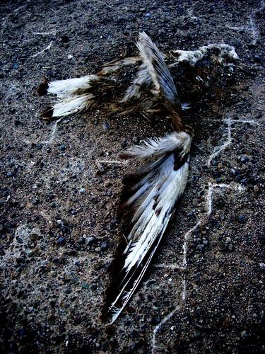 death, dead birds, killings, road kills