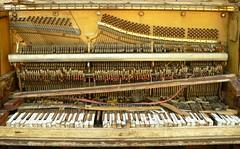 The Piano in the Woods I (hurleygurley) Tags: california wood orange macro abandoned yellow interestingness rust y marin piano instrument wfg bo rotten rgb hg lagunitas hurleygurley westmarin schoolyard reup dulyel utatayelloworange elisabethfeldman faveset bonotinset