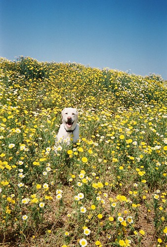 duke in the flowers