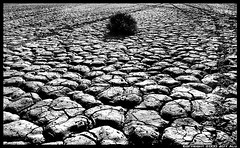 Alone (Jeff T. Alu) Tags: desert digital black white california dry lake surreal moody lonely dark outdoors bleak blackandwhite deserted illusion zen medetation medetate power impact graphic doom bright earthy dirt gritty intense visionary heat passion 4x4 remote desolate dreamy nightmare euphoric