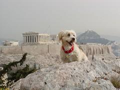 Freddie and the Acropolis (RobW_) Tags: 2002 dog topv111 1025fav 510fav march interesting 123 321 parthenon greece greatshot freddie acropolis showcase creamofthecrop philopappus 555v5f top500 interestingness191 cotcpersonalfavorite i500 explore06jun05 123pets abigfave dogsofgreece