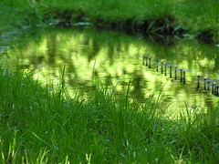 pond (Sergio Dimartino) Tags: gardens green reflections waters