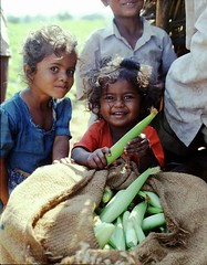 Babycorn Harvest (BoazImages) Tags: boy india frutas girl smile 1025fav children mercado agriculture vegetales babycorn