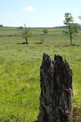 Once was Beautiful (unflux) Tags: trees tree beautiful field grass nikon d70 farm stump land once unflux gettman