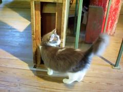 Mill Kitty (trint) Tags: burfordville semo missouri capegirardeau mill village rural cat kitty crunchy whuffie