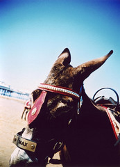 Max the Donkey (Lexington Bosh) Tags: max donkey blackpool lomo crossprocessed beach sand pier blue saveme10 savedbythedeletemegroup saveme11 awesome justawesome modernart