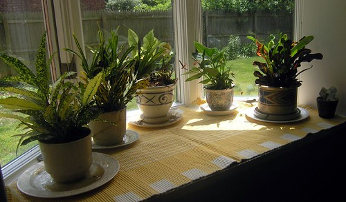 Bay Window Plants  6-10-05