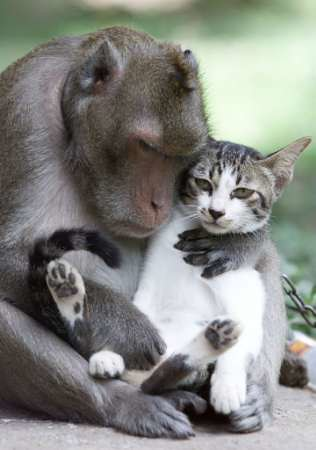 Cute monkeys cats