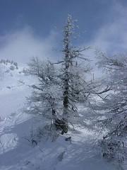 DSCN1423 (skiworld) Tags: slovene kranjska gora bohinj maribor krvavec humanfish winter sports