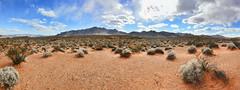Mojave Desert Landscape (BongoInc) Tags: nevada mojavedesert valleyoffire