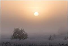 early morning (HP019844) (Hetwie) Tags: natuur frost ijs heather nachtvorst ice zonsopkomst kou rijp nature sunrise ochtend strabrechtseheide strabrecht frozen vorst heide lierop noordbrabant nederland