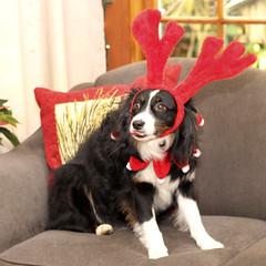 Thwbbbbbbt!! (ruthlesscrab) Tags: notmydog dog chien hund perro missy