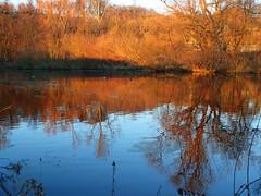 Sunset on the Ruhr (Christa_P) Tags: nature outdoor water wasser river fluss fall autumn herbst reflections spiegeln spiegelung mülheimanderruhr germany nrw sunset sonnenuntergang orange blue