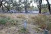 2016.11.18.06.06.07-Campsite 10 (www.davidmolloyphotography.com) Tags: newsouthwales darlingriver menindee kinchega kincheganationalpark lakemenindee