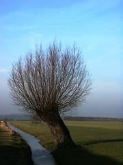 wilg (wester) Tags: tree dutch 1025fav 510fav wow landscape topv333 willow top20landscape 525fav 110fav dutchlandscape top20tree