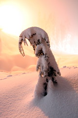 lonely snow monster (Vida Morkunas (seawallrunner)) Tags: snow night wow snowshoe interestingness utata seymour cwall beammeup snowmonster nightphotographyproject