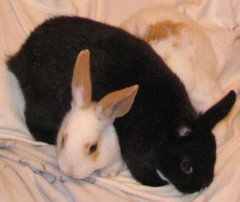 """Ebunny and Ifurry"" - When pet names become puns"