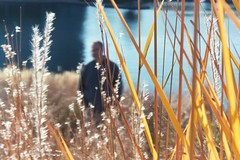 Portrait in the Grass (Mamluke) Tags: autumn portrait sun sunlight lake fall water grass minnesota yellow jaune automne gold golden see agua eau wasser bright retrato or herbst lac erba amarillo amarelo gelb giallo otoo gras tageslicht sunlit portret acqua autunno geel liquid ritratto herbe oro zonlicht erbe gulden goud hierba leau lumiredusoleil luzdelsol mamluke lucesolare deherfst