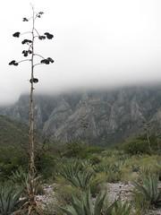 IMG_0042 (enriquevera2000) Tags: mexico paul climbing nuevoleon monterrey scouting lahuasteca recon escaladaenroca paulvera abuelofuego