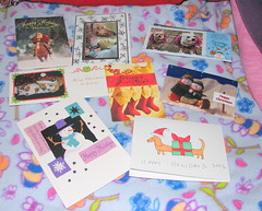 CMC Christmas Card Exchange (radiant star) Tags: christmas cats cute dogs cards christmascards exchange cmc commentonmycuteness