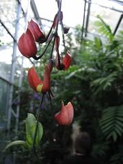 (antisyzygy) Tags: oxford botanicgardens latesummer