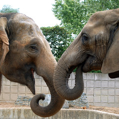 elephant talk by gin_able, on Flickr