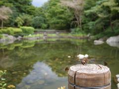 公園 (pvll) Tags: 公園 池 虫