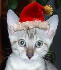 Pasha elf